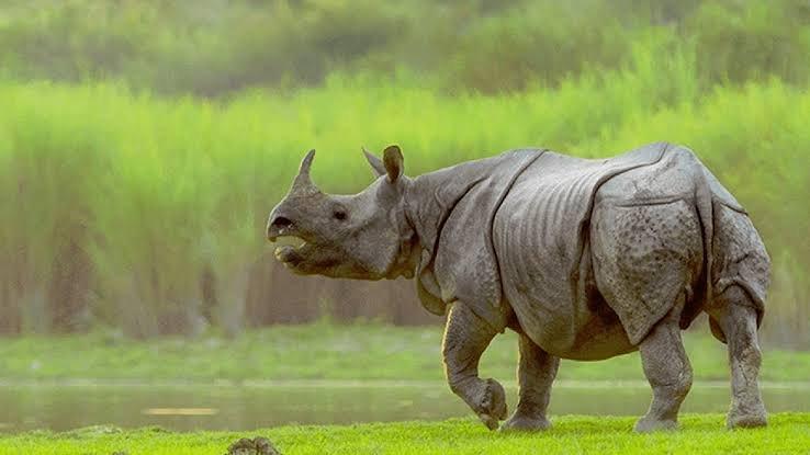 One horned Rhinoceros inside Kaziranga National Park