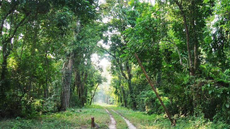 Jeypore Rainforest, Dehing Patkai