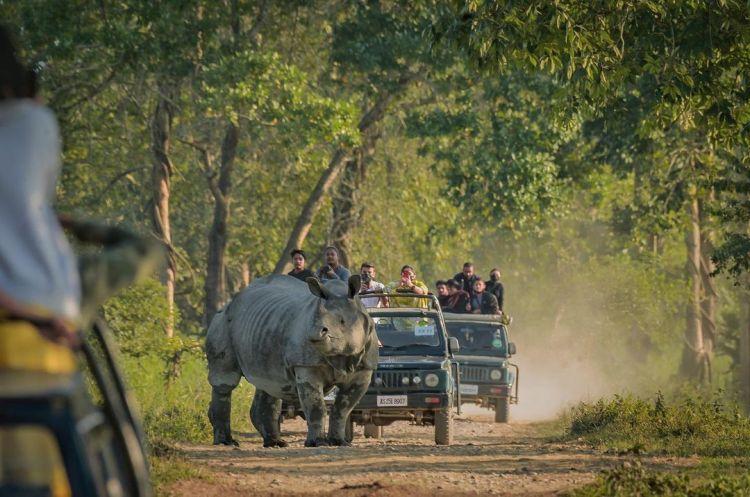 Tourists on Safari rides at Kaziranga National Park